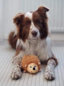 What to do if my dog is anxious home alone