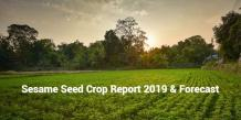 Sesame Seed Crop Report 2019 And Forecast | Organic Sesame Seeds