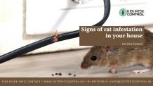 Signs of a rat infestation in your house