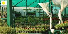 Best Plant Nursery in Chandigarh