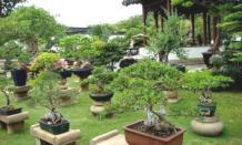 Wisata taman Bulgeria Art Bonsai, spot foto baru di Panca Rijang Sidrap