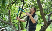 Tips and Tricks: How to Take Care of Your Trees