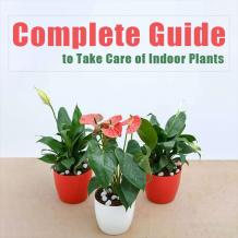 Guide For Indoor Plants
