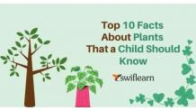 Top 10 Facts About Plants that a Child Should Know   Swiflearn