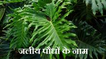 40+ Best Water Plants Name in Hindi and English | जलीय पौधों के नाम