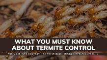 What you must know about termite control