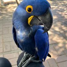 Home - Pet Bird Breeders