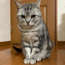 HOME - ZENA CAT breeders