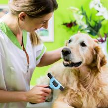 Hankpets - Every Pet Owners Choice | Pets Grooming Experts