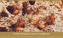 Why having termite infestation at home is troublesome