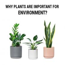 Why Plants are Important For Environment?