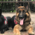 Best Dog Training for Puppy & Service Dog in NYC, CT & NJ
