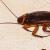 Cockroaches Control Services Singapore   Termibug