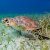 Cayman Turtle Centre