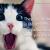 Magento website development cost | CodeTiburon