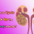 What Do Cysts In Or On The Kidney Indicate?
