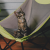 Why my cat needs a cat hammock -News Hub Feed - One Place For All News