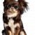 Dog Walking, Training, Grooming & Boarding Services - Petsfolio
