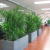 Some Best Office Indoor Plants To Energize Your Space