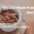 mexico plant protein market
