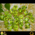 Peridot Stone Benefits | Peridot Gemstone | Gemstone Universe