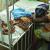 Ghana Malaria- The virus destroying many lives – Ghanalive.tv