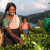 Climate action | Community resilience | Women's empowerment | Peace | Sustainable Development