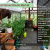 Smart Greenhouse – A Rising Trend in Indoor Farming Practices
