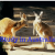Study in Australia, Study Abroad in Australia - EMC Australia