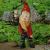 Pixie/Gnomes - Super Hero Garden Gnome Thor