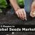 Top Global Seeds Companies in the Worldwide