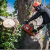 north-florida-tree-services.business