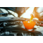 Car Oil Change Services Toronto