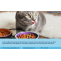 Cat Food Project Report 2021: Plant Setup, Manufacturing Process, Business Plan, Industry Trends, Machinery Requirements, Raw Materials, Cost and Revenue 2026 – The Market Gossip