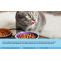 Cat Food Manufacturing Project Report: Cost and Revenue, Plant Setup, Industry Analysis, Price Trends, Manufacturing Process, Business Plan, Raw Materials, Machinery Requirements, 2021-2026 – Syndicated Analytics – Domestic Violence