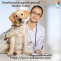 Importance of ESA letter while carrying an emotional support dog - PDSC