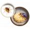 Pest Control Tucson AZ | Conquistador Pest and Termite | Call 520-624-5901