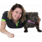 Best Dog Trainer in Sydney