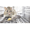 Mice Control Barrie - Mice Removal Barrie | Awesome Pest