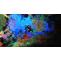 Scuba Diving in Andaman Islands, Book Scuba Diving Tour Package in Andaman & Nicobar Islands
