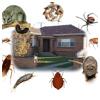 pest logic's picture